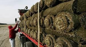Sod Estimate by Turfs Up Sod Sod Delivery Norfolk Virginia Chesapeake