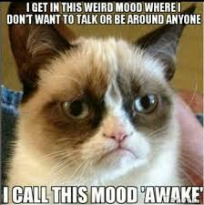 Angry Cat Meme - angry cat is so real lol go head and laugh pinterest angry