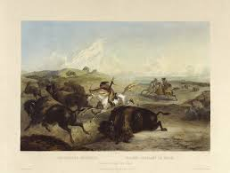 bison hunting wikipedia