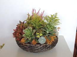 basket arrangements succulent arrangement san diego only succulents