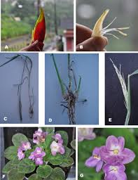 native plants of brazil teaching of meiosis and mitosis in schools of developing countries