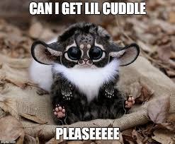 Cuddle Meme - cute fox imgflip