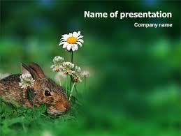 rabbit powerpoint template backgrounds 01815 poweredtemplate com