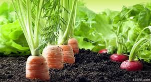Weather Zones For Gardening - growing food in different climate zones survivopedia