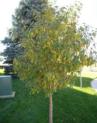 have your trees started dropping their leaves already north