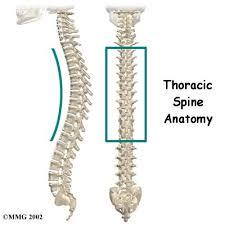 Human Vertebral Column Anatomy Human Anatomy Diagram Show And Learn More Thoracic Spine