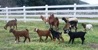 animals ferdinand u0027s familia