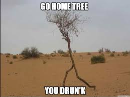 tree meme 28 images 30 most funniest tree meme pictures and