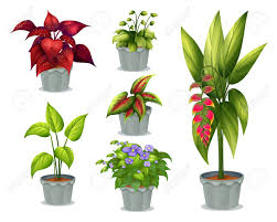 pot plant clipart ornamental plant pencil and in color pot plant