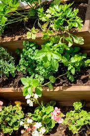 diy tiered herb garden u2014 decor and the dog
