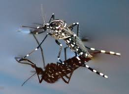 Eliminate Mosquitoes In Backyard by How To Get Rid Of Mosquitoes In Your Yard Dc Mosquito Squad