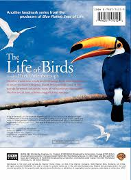 bbc home design videos amazon com the life of birds david attenborough movies u0026 tv
