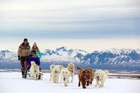 dog sledding iceland scan magazine