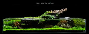 Planted Aquarium Aquascaping Aquascaping Articles Tutorials U0026 Videos The Green Machine Blog
