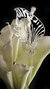 callalily flower waterford fleurology calla flower