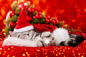 cat christmas top tips for a safe christmas for your cat or kitten