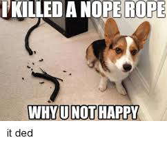 Nope Meme - a nope rope rope why u not happy happy meme on me me