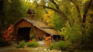 wooden house in the forest 3840x2160 4k 16 9 ultra hd uhd