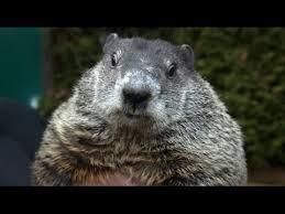 hibernating groundhogs germany