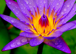 beautiful plants most beautiful plants in the world my web value