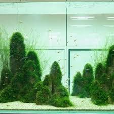 Aquascape Takashi Amano 130 Best Aquariums Images On Pinterest Aquarium Ideas