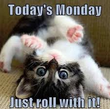 Monday Cat Meme - hire resolve on twitter it s monday and that means a new start