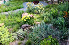 examples of native plants california native plant landscape design examples garden ideas