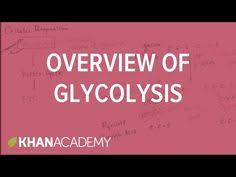 plant cells crash course biology khan academy rewatch for