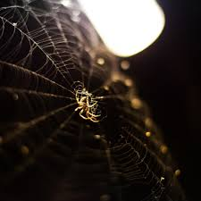 nature spider web ipad air wallpaper download iphone wallpapers