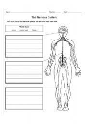nervous system here is a free nervous system worksheet or quiz