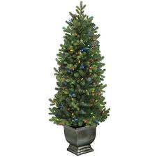 potted christmas tree trees costco