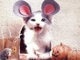Kitten Halloween Costumes Pet 25 Cats Costumes Ideas Cat Costumes Cute