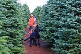 u cut christmas tree farms near washington dc