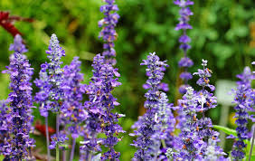 aromatic bloom essential oils ethereal farbenpracht flora