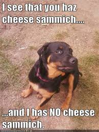 Sammich Meme - how is this fair i has a hotdog dog pictures funny pictures