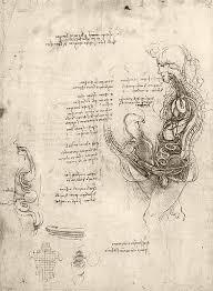 leonardo da vinci u0027s an anatomical drawing