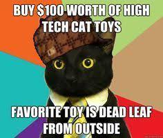 Business Cat Memes - business cat meme lol pinterest business cat meme meme and