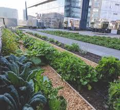 quality athletics rooftop restaurant garden u2014 seattle urban farm
