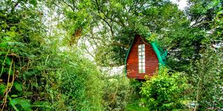 ls that look like trees british airbnb users want to stay in this treehouse in cornwall more