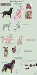 Dog Anatomy Organs Best 10 Dog Anatomy Ideas On Pinterest Drawing Guide Dog
