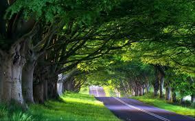beautiful road in nature wallpaper 1989 2550x1594