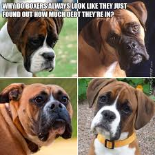 Boxer Meme - boxers memes best collection of funny boxers pictures