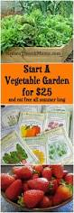 start a vegetable garden for 25 vegetable garden plants and