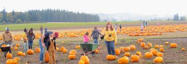 Roloffs Pumpkin Patch In Hillsboro Or by 4 Pumpkin Patches To Discover This Fall A Good Gray