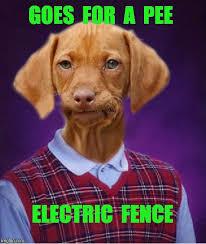 Yo Dog Meme - yo dog imgflip