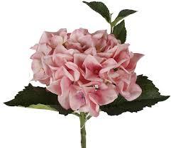 pink hydrangea pink hydrangea stem paul michael company