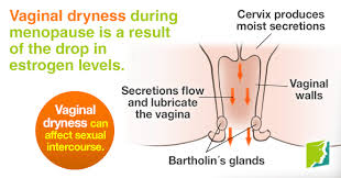 woman s virgina vaginal dryness and sexual intercourse