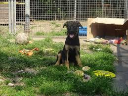 Tierheim Bad Salzuflen Hunde Hilfe Für Daisy Junge Hündin Benötigt Schnellstens Herz Op
