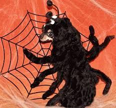 Dog Spider Halloween Costume Cool Halloween Dog Costume Spider Ideas Saveourpuppy