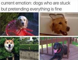 Everything Is Fine Meme - best 25 everything is fine meme ideas on pinterest this is fine
